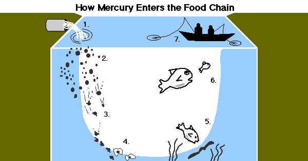 Minamata disease documents to be displayed in china for Does fish have mercury
